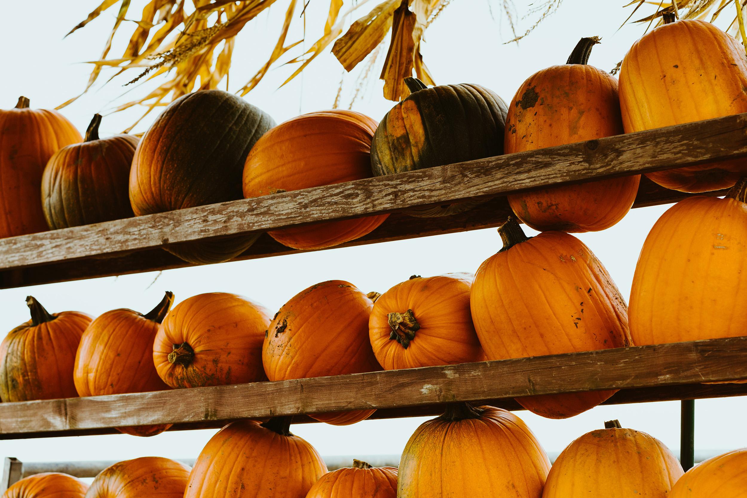 Oktoberdots pompoenen kopen in Nederland